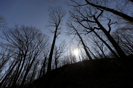 Inwood Hill Park, Manhattan's only old growth forest